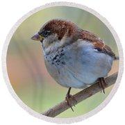 Humble Housesparrow Round Beach Towel