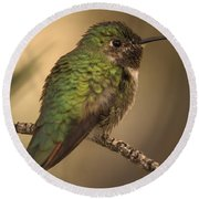 Humming Bird On Branch Round Beach Towel