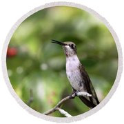 Hummingbird - Berries Round Beach Towel