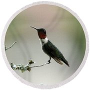 Hummingbird - Just The Tip Round Beach Towel