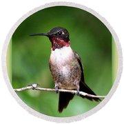 Hummingbird - Male - Will Soon Be Grown Round Beach Towel