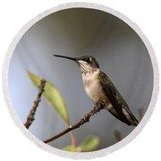 Hummingbird - Ruby-throated Hummingbird - Near The End Round Beach Towel