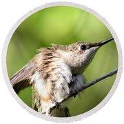 Hummingbird - Ruby-throated Hummingbird - Stretch Time Round Beach Towel