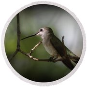 Hummingbird - Under The Canopy Round Beach Towel