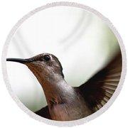 Hummingbird - Closeup Round Beach Towel