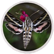 Hummingbird Moth - White-lined Sphinx Moth Round Beach Towel
