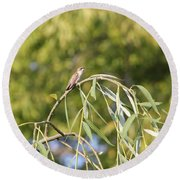Hummingbird Resting In The Willow Round Beach Towel