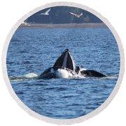 Hump Back Whale In Alaska Round Beach Towel