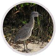 Immature Blacked Crowned Night Heron Round Beach Towel