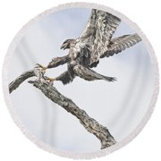Immature Eagle At Play Round Beach Towel