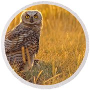 Immature Great Horned Owl Backlit Round Beach Towel
