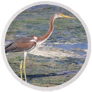 Immature Tricolored Heron Standing At High Tide Round Beach Towel
