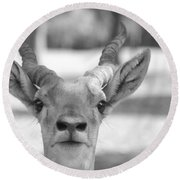 Impala -black And White Round Beach Towel