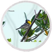 Inquisitive Yellow Throated Warbler Round Beach Towel