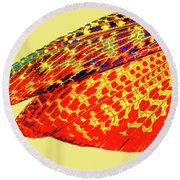 Insect Wing Study Round Beach Towel