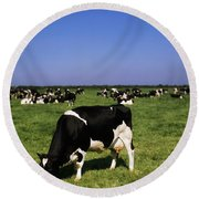 Ireland Friesian Cattle Round Beach Towel