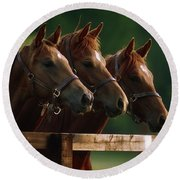 Ireland Thoroughbred Horses Round Beach Towel