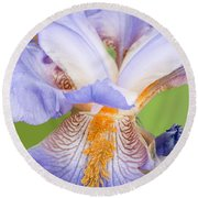 Iris Full Bloom Round Beach Towel