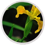 Iris In Yellow Round Beach Towel