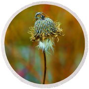 Isolated Locoweed Round Beach Towel