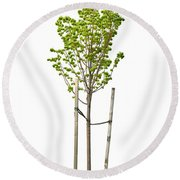 Isolated Young Linden Tree Round Beach Towel