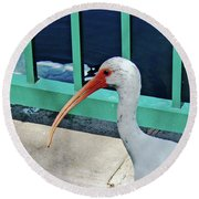 Ivis Ibis And Packy Round Beach Towel