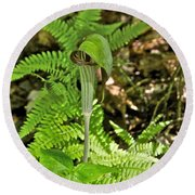 Jack-in The-pulpit_4588 Round Beach Towel