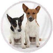 Jack Russell Terrier Dog, Rockie Round Beach Towel