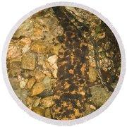 Japanese Giant Salamander Round Beach Towel