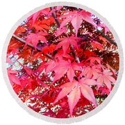 Japanese Maple Leaves 11 In The Fall Round Beach Towel
