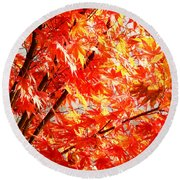 Japanese Maple Leaves 12 In The Fall Round Beach Towel