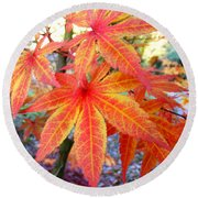 Japanese Maple Leaves 13 In The Fall Round Beach Towel