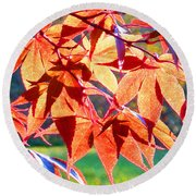 Japanese Maple Leaves 6 In The Fall Round Beach Towel