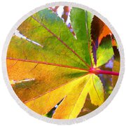 Japanese Maple Leaves 7 In The Fall Round Beach Towel