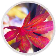 Japanese Maple Leaves In The Fall Round Beach Towel
