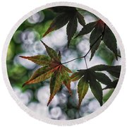 Japanese Maple Round Beach Towel