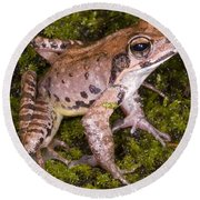Japanese Ranid Frog Round Beach Towel