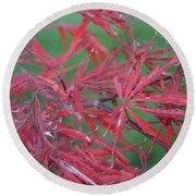 Japanese Red Leaf Maple Hybrid Round Beach Towel