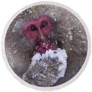 Japanese Snow Monkey Round Beach Towel