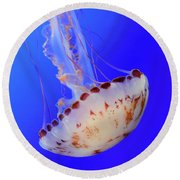 Jellyfish 4 Round Beach Towel