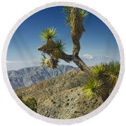 Joshua Trees Number 357 Round Beach Towel
