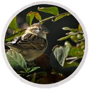 Junior Sparrow Round Beach Towel
