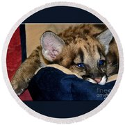 Just A Big Kitten Round Beach Towel
