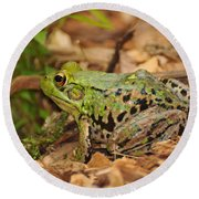 Just A Frog Round Beach Towel