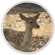Juvenile Deer Round Beach Towel