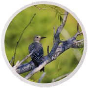 Juvenile Golden-fronted Woodpecker Round Beach Towel