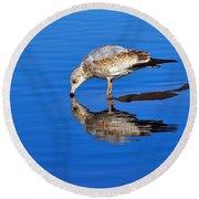 Juvenile Ring-billed Gull  Round Beach Towel
