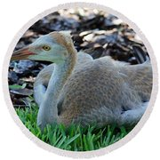 Juvenile Sandhill Crane At Rest Round Beach Towel