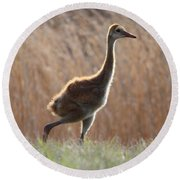 Juvenile Sandhill In The Marsh Round Beach Towel