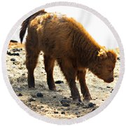 Juvenile Scottish Highlander Cattle Round Beach Towel